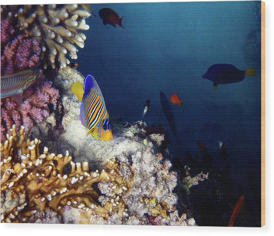 Exciting Red Sea World Wood Print