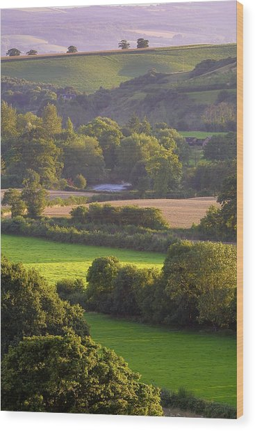 Exe Valley Evening Wood Print by Neil Buchan-Grant