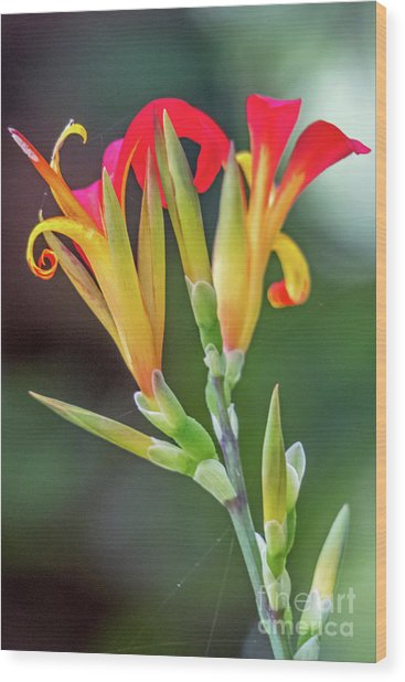 Exotic Flowers Wood Print