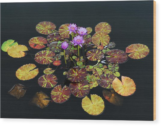 Exotic Lilies Wood Print by Kurt Shaffer