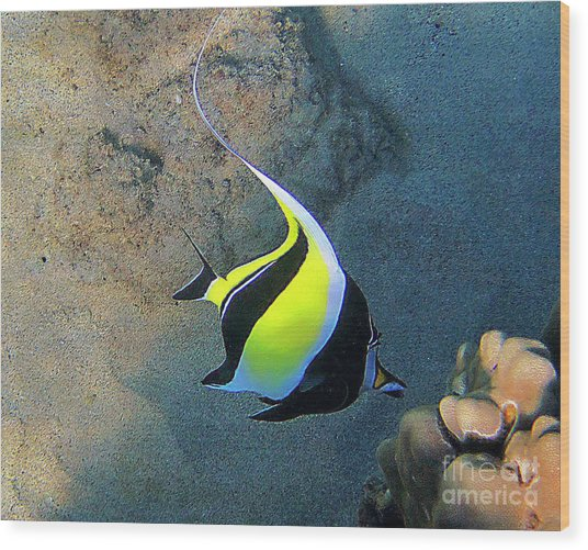Exotic Reef Fish  Wood Print