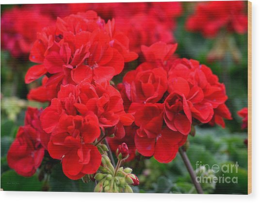 Wood Print featuring the painting Expressive Floral Red Geraniums E131716  by Mas Art Studio