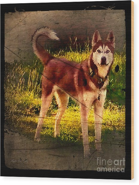 Wood Print featuring the photograph Expressive Mixed Media Husky A4116 by Mas Art Studio