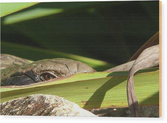 Eye Contact Wood Print