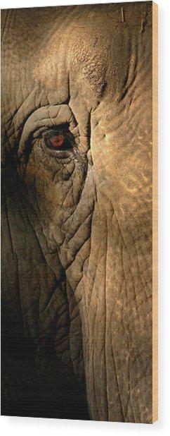 Eye Of The Elephant Wood Print
