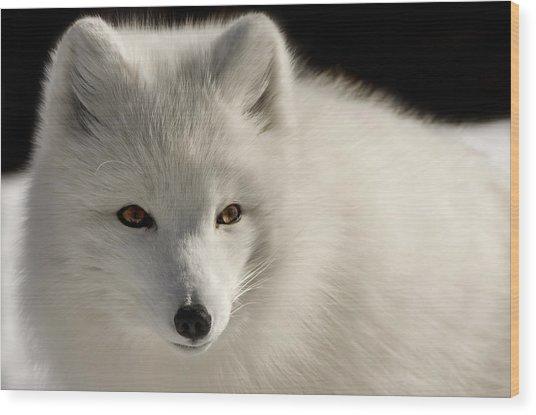 Eye Of The Fox Wood Print