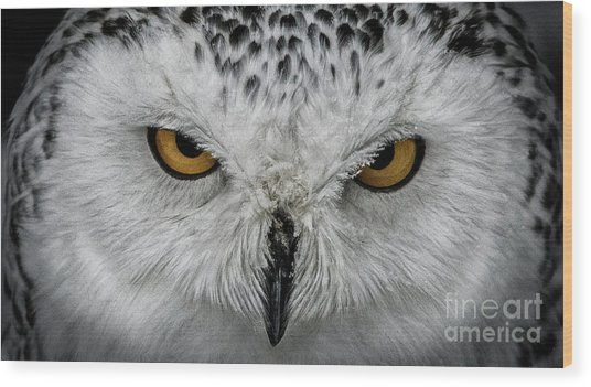 Wood Print featuring the photograph Eye-to-eye by Brad Allen Fine Art