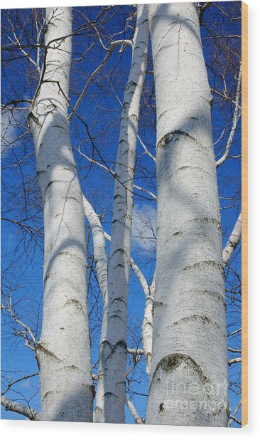 Eyes Of Birch Wood Print