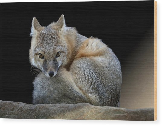 Eyes Of The Fox Wood Print