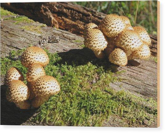 Fabulus Fungi Wood Print