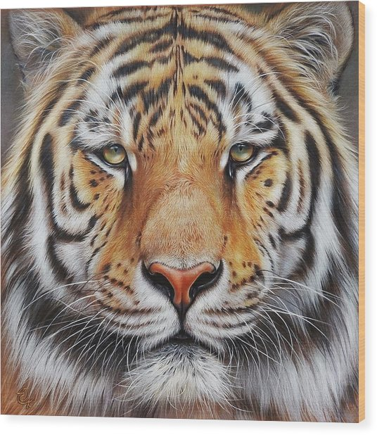 Faces Of The Wild - Amur Tiger Wood Print