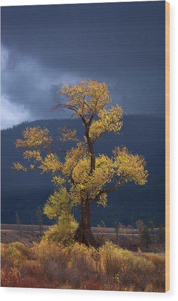 Facing The Storm Wood Print