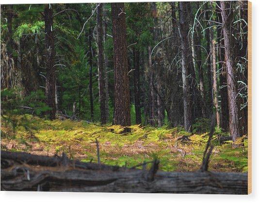 Cascade Mountain Range Fading Ferns Wood Print