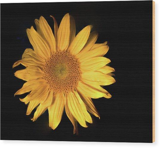 Fading Sunflower Wood Print
