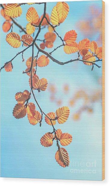 Fagus Melody Wood Print