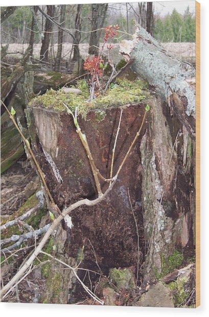 Fairy House On Stump Wood Print