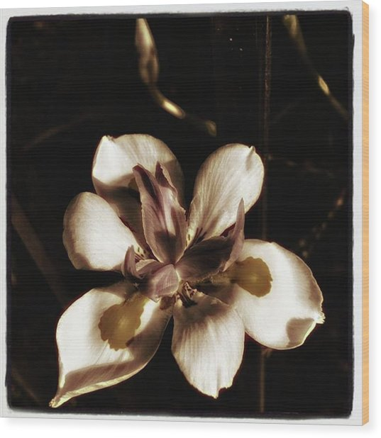 Wood Print featuring the photograph Fairy Iris. A Butterfly Landed On My by Mr Photojimsf