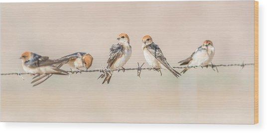Fairy Martins Wood Print