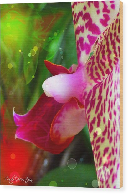 Fairy Orchid Wood Print