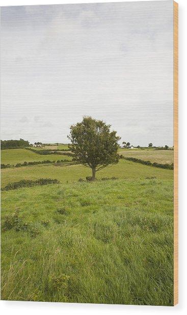 Fairy Tree In Ireland Wood Print