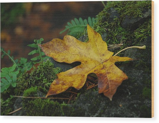 Fall Alone Wood Print by Lori Mellen-Pagliaro