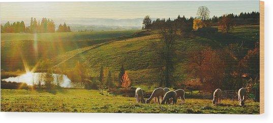 Fall Alpaca Farm Wood Print
