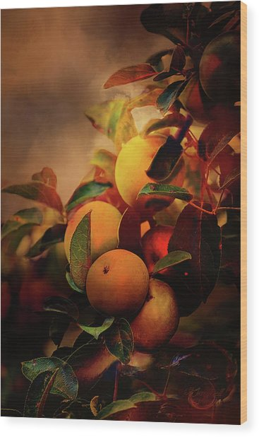 Fall Apples A Living Still Life Wood Print