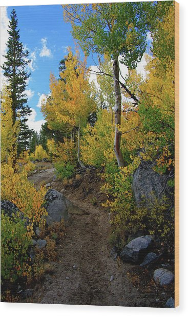 Fall Aspens In The Eastern Sierra Wood Print