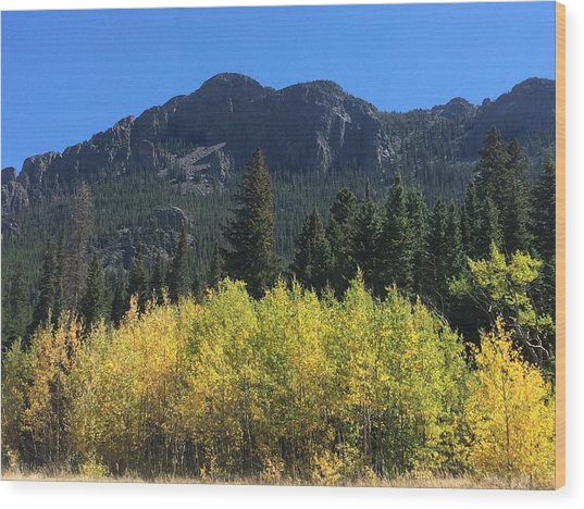 Fall At Twin Sisters Wood Print