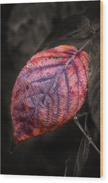 Fall Beech Leaf Wood Print