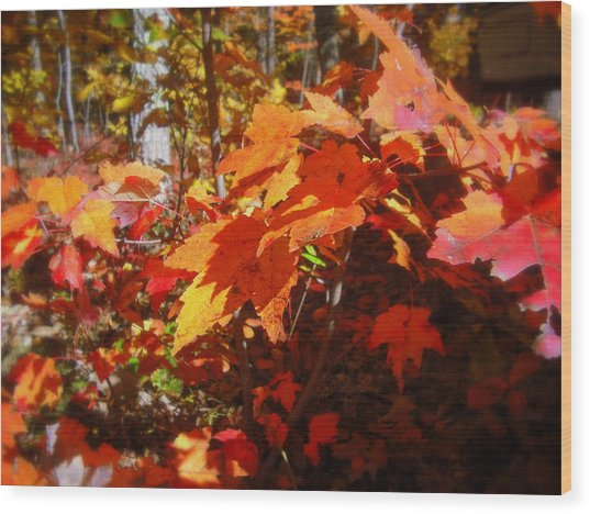 Fall Color 2 Wood Print by John Julio