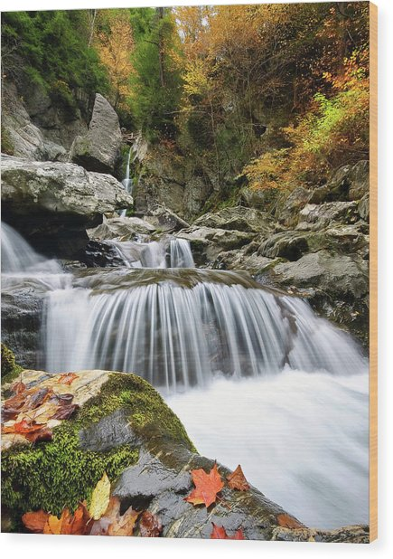 Fall Color Bash Wood Print