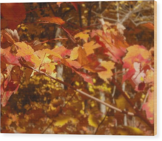 Fall Color Wood Print by John Julio
