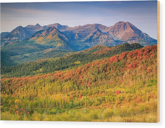 Fall Color On The East Slope Of Timpanogos. Wood Print
