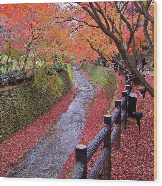 Fall Colors Along Bending River In Kyoto Wood Print by Jake Jung