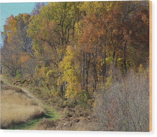 Fall Colors As Oil Wood Print