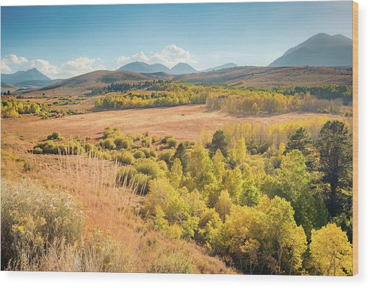 Fall Colors At Dunderberg Meadows Wood Print