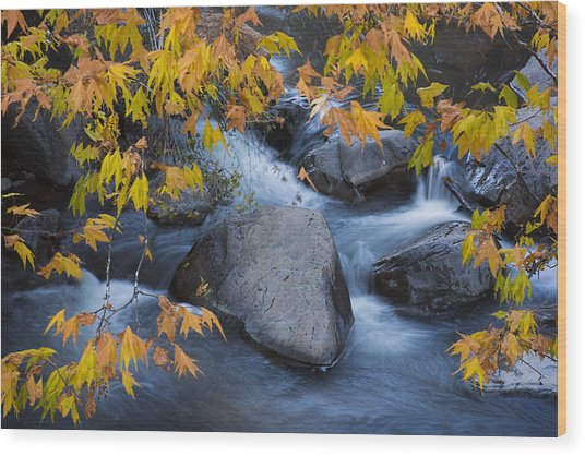 Fall Colors At Slide Rock Arizona Wood Print