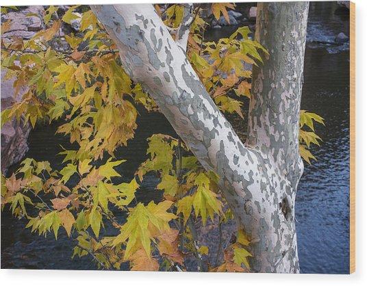Fall Colors At Slide Rock Arizona- Tree Bark Wood Print