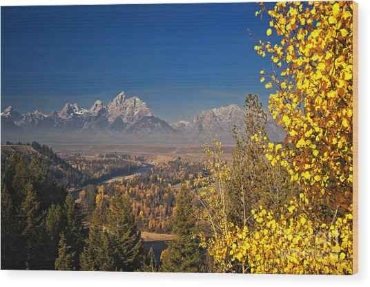 Fall Colors At The Snake River Overlook Wood Print