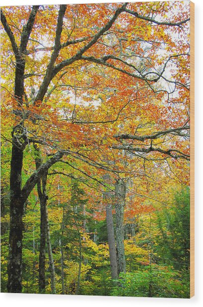Fall Colors In Maine 1 Wood Print by Jonathan Hansen
