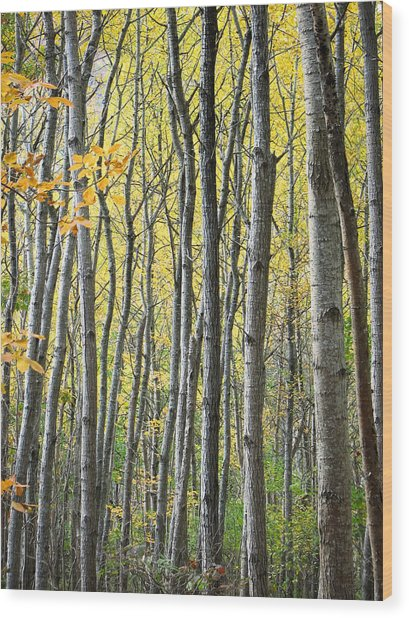 Fall Colors In Maine 2 Wood Print by Jonathan Hansen