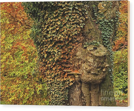 Fall Colors In Nature Wood Print