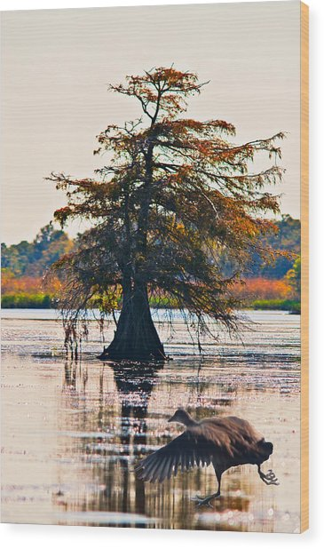 Fall Colors In The Marsh Wood Print by Bill Perry