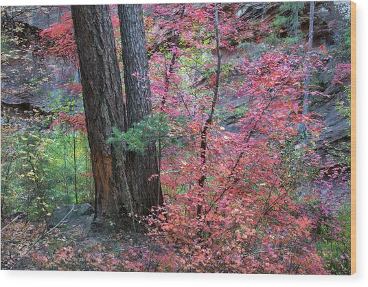 Fall Colors In West Fork Of Oak Creek Canyon Wood Print