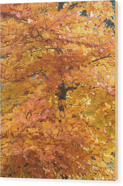 Fall Colors Wood Print by Mary Gaines