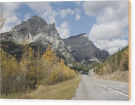 Fall Colours On Hwy #40 Kananaskis Wood Print