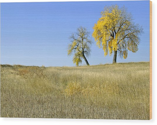 Fall Days In Fort Collins Co Wood Print
