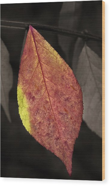 Fall Elder Leaf Wood Print