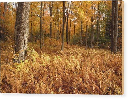 Fall Ferns Wood Print by Eric Foltz